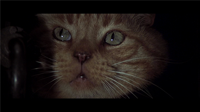 pere-koniec-cat-Jonesy-alien
