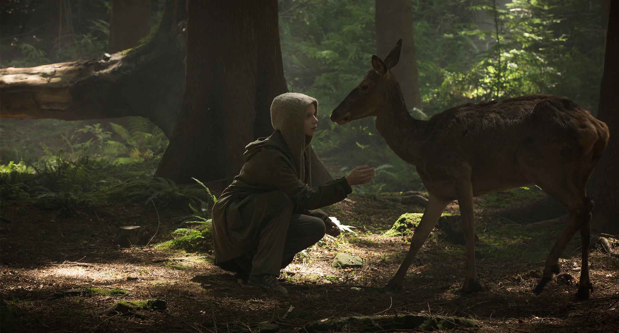 morgan-deer