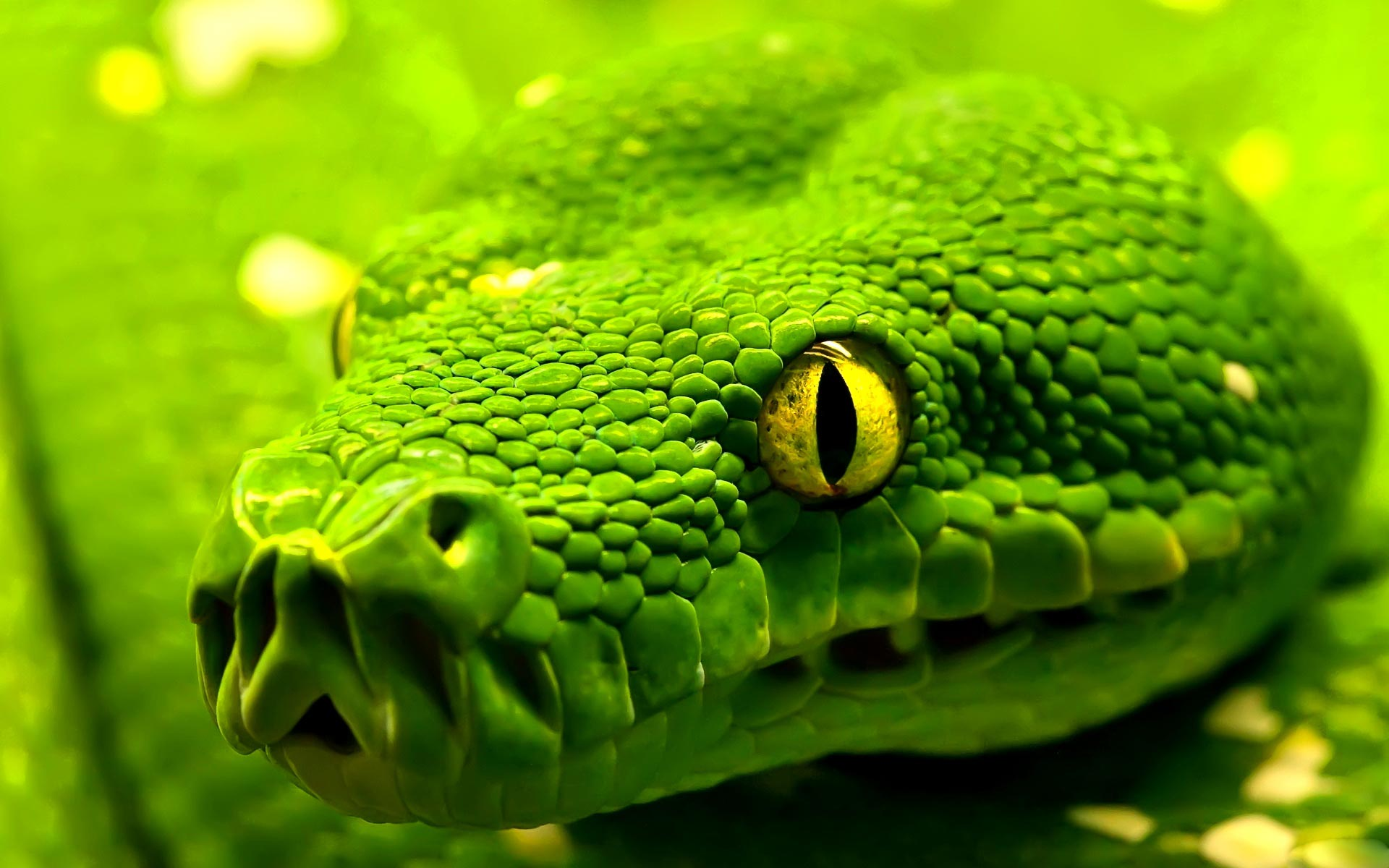 beautiful-green-snake-hd-wallpapers-cool-desktop-background-images-widescreen