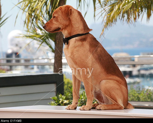Hagen the dog cast member at the photo call for the film White God (Feher Isten) at the 67th Cannes Film Festival, 2014