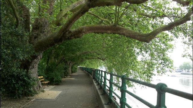04_Bishops Park_London, England